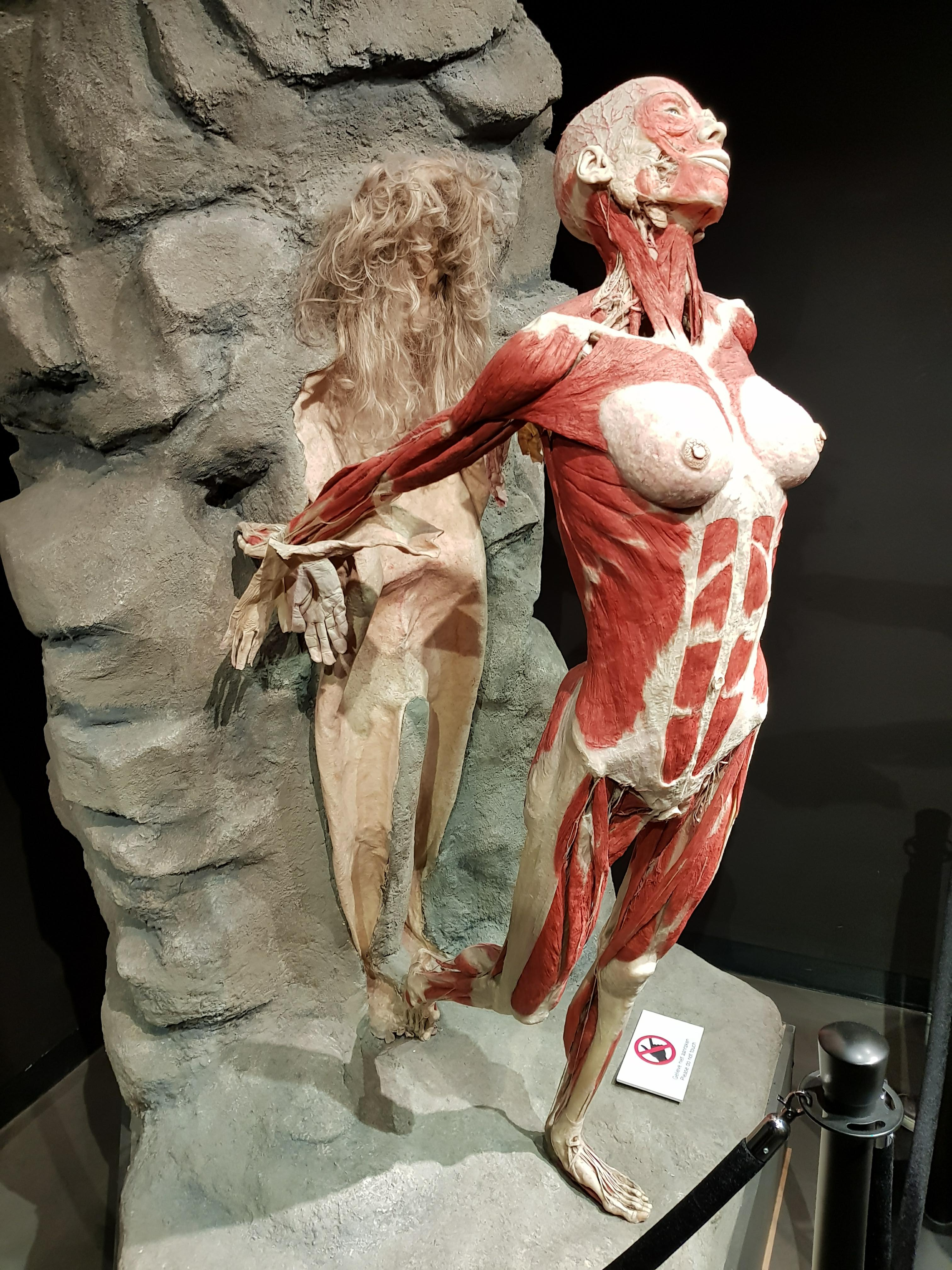 A statue of a woman emerging from her skin where you can just see her muscles